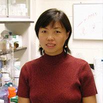 Xinyu Zhao, PhD