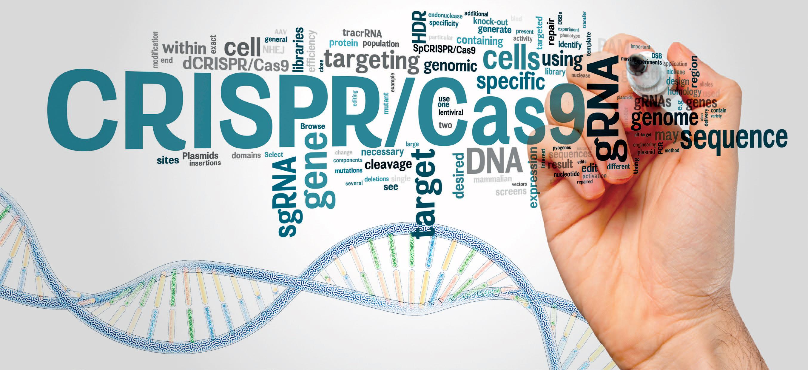 Fragile X CRISPR-Cas9