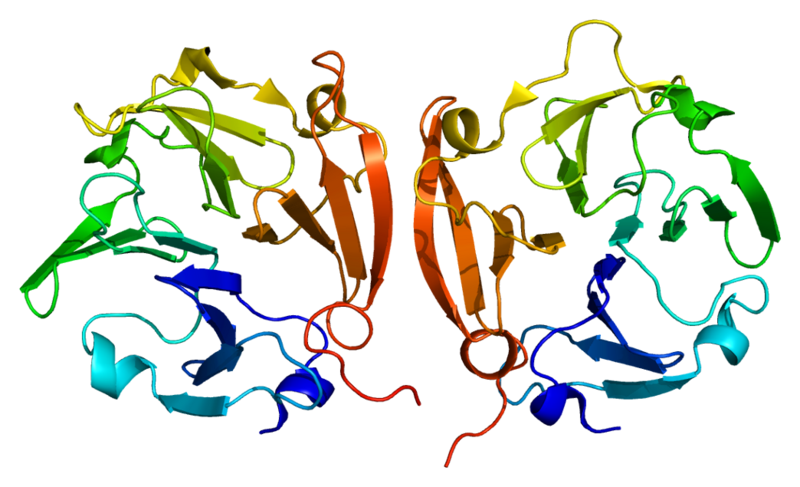 Structure of the MMP9 protein