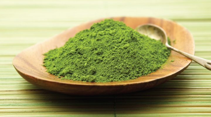 Mega Green Tea Extract to Treat Fragile X?