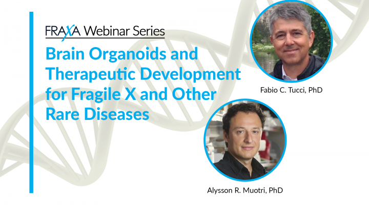 Brain Organoids and Therapeutic Development for Fragile X and Other Rare Diseases