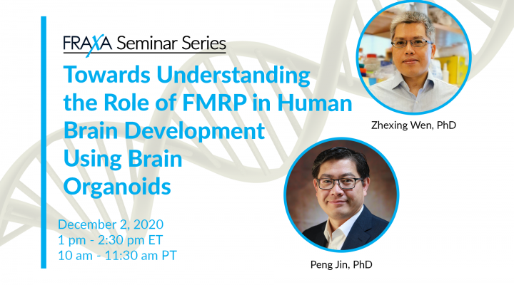 Towards Understanding the Role of FMRP in Human Brain Development Using Brain Organoids