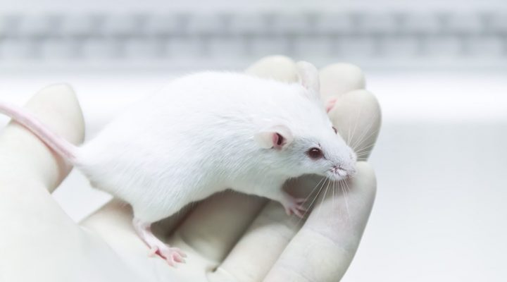 Bryostatin-1 in Long-term Use Seen to Arrest Fragile X Symptoms in Mouse Model